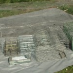 Selection of live traps